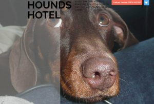 Hounds-Hotel-Canine-Customer-Experience-2