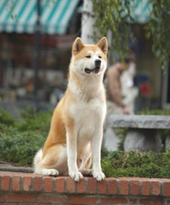 hachi-the-dog-that-waited